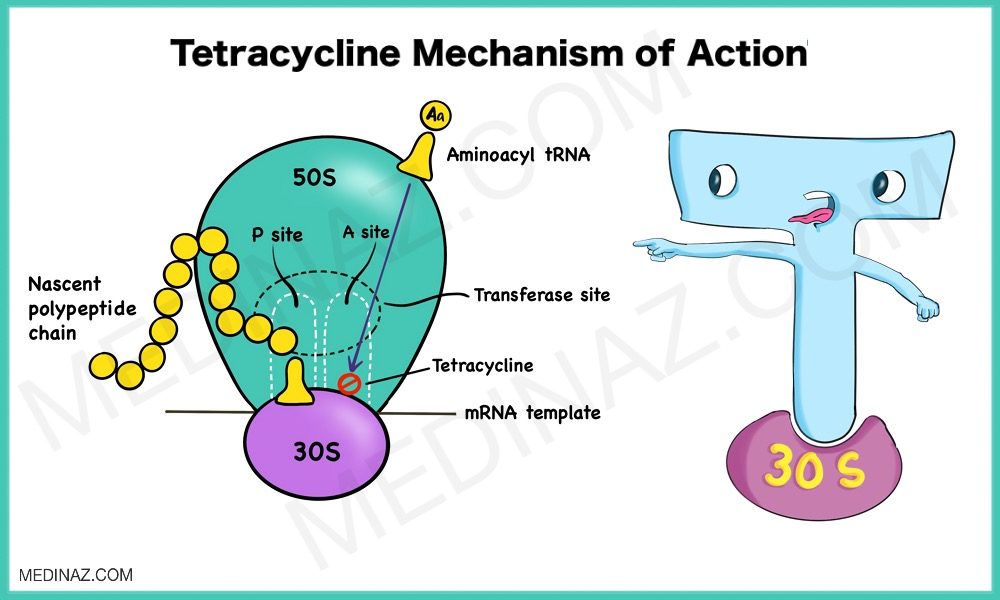 Tetracycline mode of action