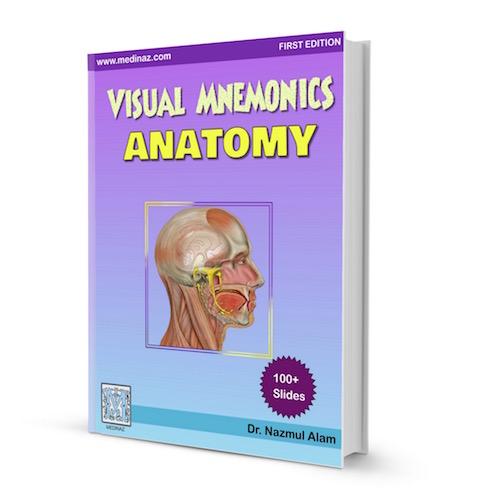 VISUAL MNEMONIC ANATOMY